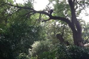 Photo #1: T's Tree Service