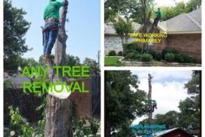 Photo #1: MCKINNEY PLANO ALLEN LOW PRICES CAMPOS TREE SERVICE