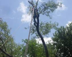 Photo #1: Plum creek. Tree trimming and removal!!!!!