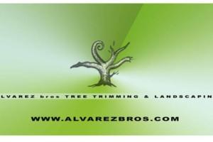 Photo #1: Alvarez Bros Tree Service & Landscaping. GARDENING SERVICE