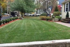 Photo #1: Landscaping service: Lawn Cut & Care