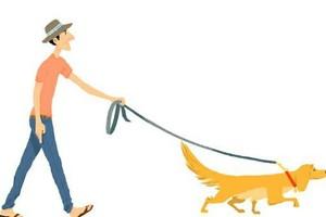 Photo #1: Dog Walking