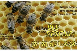 Photo #1: BEE RESCUE / SWARM REMOVAL