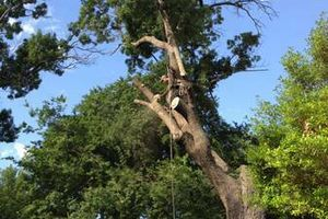 Photo #1: Tree Service 100 % insured and licensed BBB