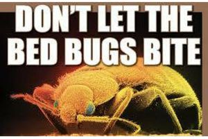 Photo #1: BED BUG REMOVAL - $50 OFF