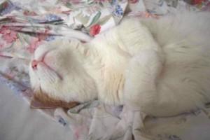Photo #1: CAT BOARDING