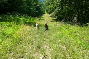 Photo #1: Happy Tails!!! DOG HIKING service in northern Westchester/Putnam Count