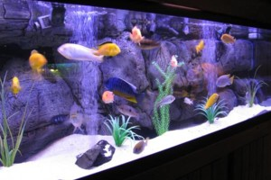 Photo #1: Aquarium Installation/Maintenance Service