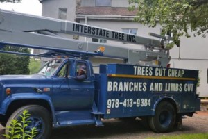 Photo #1: Interstate Tree Inc. STORM DAMAGE Clean-up and TREES CUT CHEAP and more
