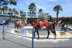 Photo #1: Pony Rides and Petting Zoos Fun for any Party!!!