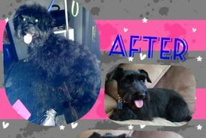 Photo #1: EXPERIENCED Dog & CAT Grooming *UNBEATABLE PRICES!*