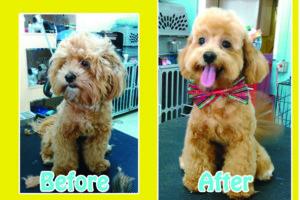Photo #1: PROFESSIONAL DOG STYLIST !!