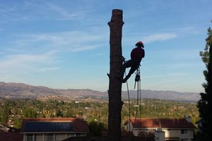 Photo #1: Residential tree service pros