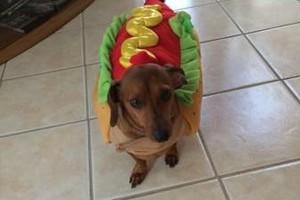 Photo #1: Non Profit Dog Walking Service