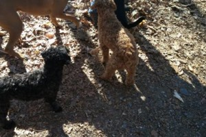 Photo #1: RELIABLE DOG WALKER AVAILABLE - HARBOR POINT AREA