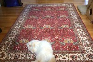 Photo #1: Need Your Rugs Cleaned! Area Rugs and Oriental Rugs Cleaned