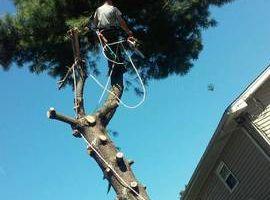Photo #1: Michael's Tree Service