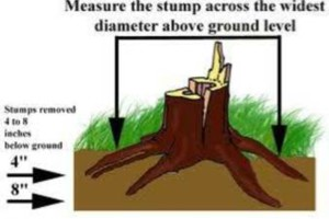 Photo #1: Premier Tree and Landscape. STUMP GRINDING