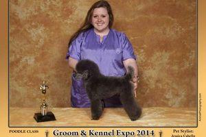Photo #1: Award Winning Pet Grooming, Creative Grooming, Experienced & Gentle