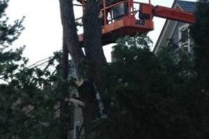 Photo #1: Platinum Tree Service Inc.