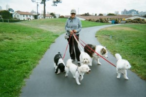 Photo #1: Pied Piper.  Pets in the City. Dog walking & Cat visits.
