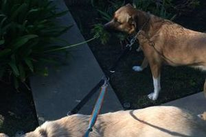 Photo #1: RC Dog Walking/Pet Sitting (Affordable)