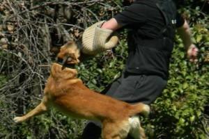 Photo #1: Elite Dog Training