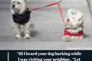 Photo #1: I walk doggies in Chicago