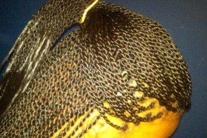 Photo #7: Neat and affordable braids and weaves