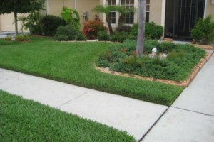 Photo #1: $40 TO TRIM MOW AND BLOW YOUR FRONT AND BACK YARD