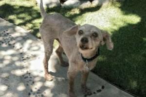 Photo #4: C.O.R.E. Dog Training & Boarding