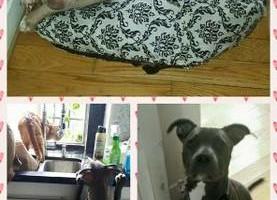 Photo #5: C.O.R.E. Dog Training & Boarding