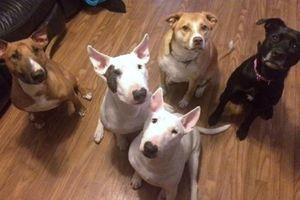 Photo #1: Professional, Positive, Rewards Based Dog Training!