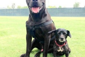 Photo #1: Pet Sitter and Dog Walker/ Pet Sitting By Virginia