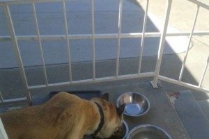 Photo #4: Pet Sitter and Dog Walker/ Pet Sitting By Virginia
