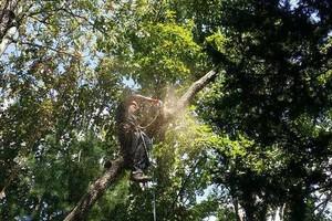 Photo #2: Schwan's Tree Care