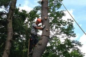 Photo #1: Schwan's Tree Care