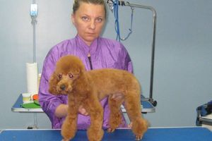Photo #2: Grooming for Cats and Dogs