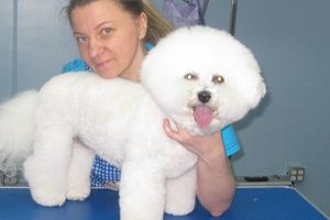 Photo #4: Grooming for Cats and Dogs