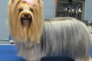 Photo #6: Grooming for Cats and Dogs