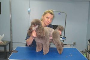 Photo #7: Grooming for Cats and Dogs