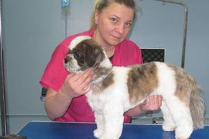 Photo #8: Grooming for Cats and Dogs