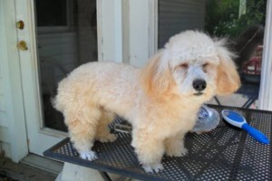 Photo #1: DOES YOUR DOG NEED GROOMING OR A BATH?