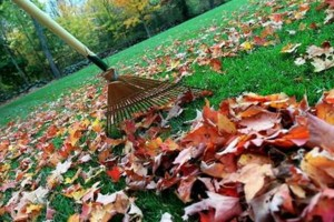Photo #3: EAGLE CONTRACTING. Fall/Winter Landscaping Services