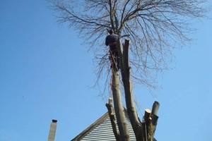 Photo #3: JB's Tree Service