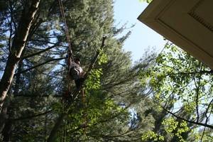 Photo #2: JB's Tree Service