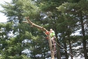 Photo #1: JB's Tree Service