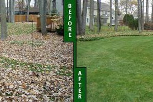 Photo #2: FALL CLEAN-UP BEFORE OR AFTER THANKSGIVING
