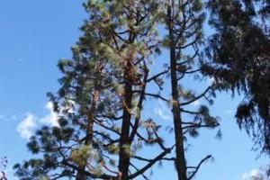 Photo #3: Frank Tree service