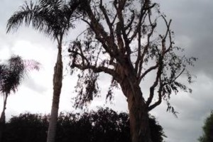 Photo #1: Frank Tree service